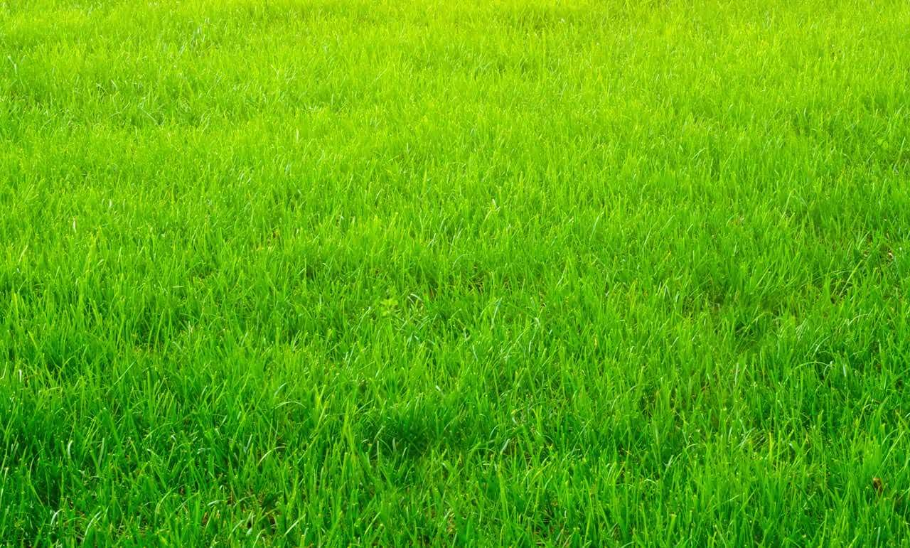 Lawn Mowing Newcastle | Lawn Mowing Company | Acreage Mowing