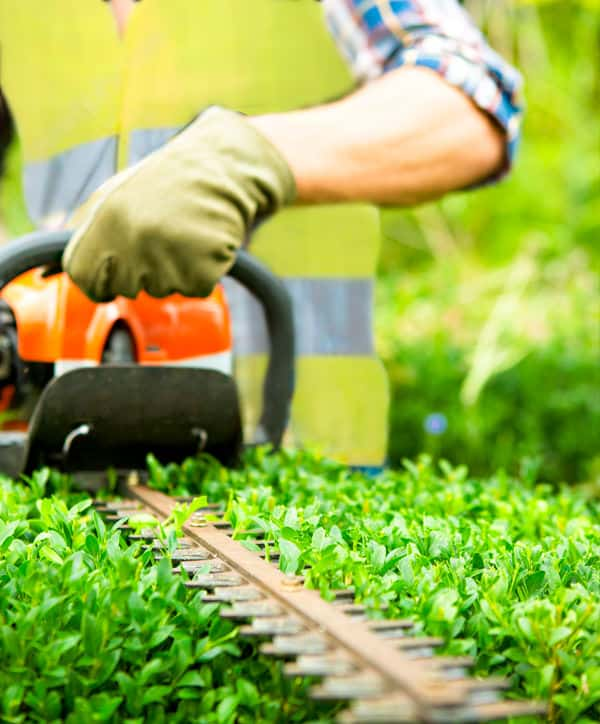 Lawn Mowing Newcastle | Hedge Trimming Newcastle & Lake Macquarie