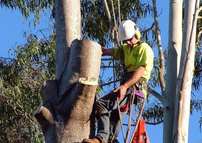 nixons-lawn-garden-tree-lopping-newcastle-hunter-valley-lake-macquarie