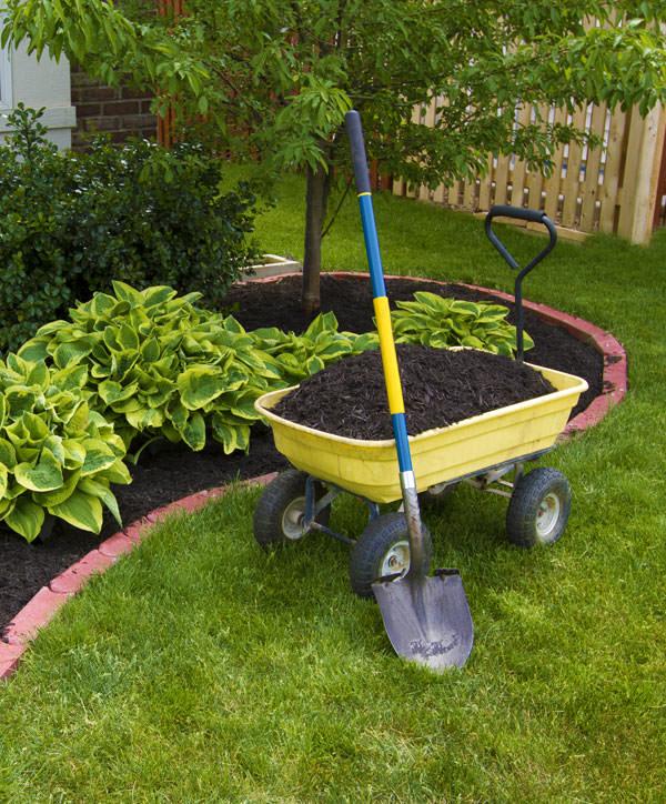 Lawn Mowing & Garden Services Newcastle & Lake Macquarie